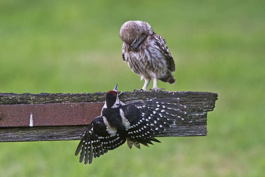 Мудрое поведение в конфликте