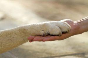 пет терапия лечение животными