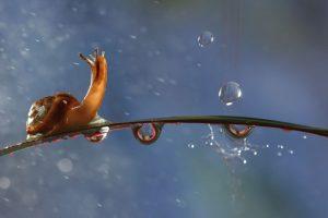 упорство и настойчивость